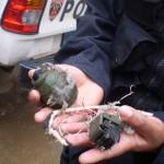 Hallan granada de guerra detrás de comisaría de Carmen Alto