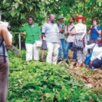 Científicos internacionales evaluaron bosques de Ucayali