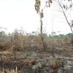 Agricultor perdió seis hectáreas de palma aceitera por practicar quema de pastizales