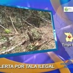 60% de bosques de Tingo María desaparecen por tala ilegal (video)