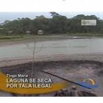 Laguna de Tingo María se está secando por tala ilegal (video)