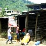 Intervienen mataderos clandestinos de aves en el VRAE