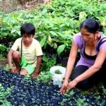 FEPAVRAE reconoce que cultivos alternativos pueden erradicar la coca ilegal