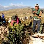 Destinarán 69 millones de soles para impulsar productividad en los pequeños agricultores