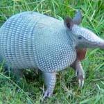 El MINAG recuperó más de cinco mil especímenes de fauna silvestre