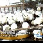 Intervienen mataderos clandestinos de aves en el VRAE (video)