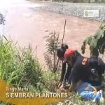 Siembran mil plantones para reforzar defensas ribereñas en Tingo María (video)