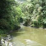 Expresan preocupación por el proceso de consulta de la Ley Forestal en el Perú