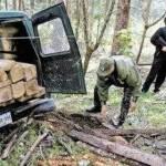 Traficantes de madera forman 'alianza tenebrosa' con narcotraficantes en el VRAE