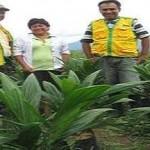Adquieren 60 mil semillas de palma aceitera
