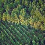 OSINFOR recibe premio por promover Pacto Etico Forestal