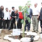 230 millones de árboles plantados es la meta para el 2011 en el Perú