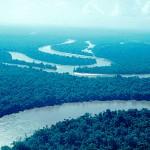 Se reforestarán más de 485 hectáreas de reserva nacional Allpahuayo – Mishana