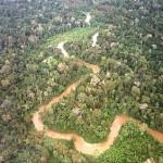 El próximo 7 de enero se lanza la Plataforma Virtual Educativa del Sector Forestal