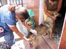 Organizan campaña de vacunación antirrábica canina en Ayacucho