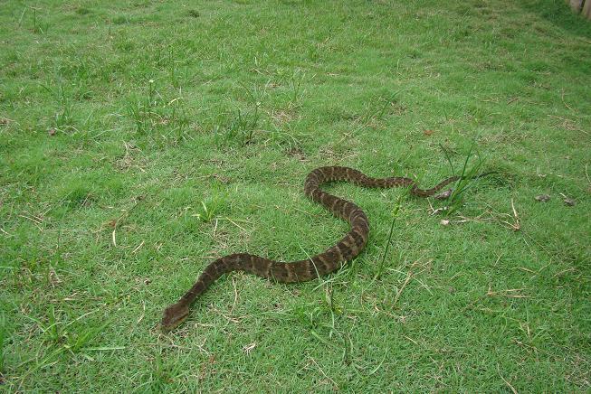 Serpiente muerde a menor de 6 años