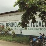 Cooperativa Agroindustrial Tocache conformó nuevo consejo de ... - INFOREGION