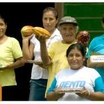 Instalarán Mesa Técnica Regional del Cacao en Madre de Dios