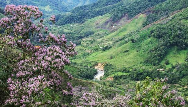 ESTA PRECIOSIDAD  ES EXCLUSIVAMENTE PERUANA Valle-los-chilchos-nueva-anp-acp-inforegion-617x351