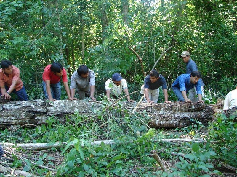 Per plataforma de manejo forestal comunitario inicia for Manejo de viveros forestales