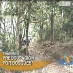 Asociación de Madereros de Tingo María critica manejo forestal (video)