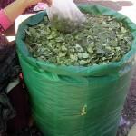 En operativo conjunto decomisan 200 kilos de hoja de coca seca en Aucayacu