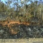 Desconocidos provocan incendio en gran extensión de bosques de San Martín