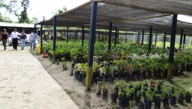Municipalidad de tambopata repotenciar vivero municipal for Viveros en maldonado