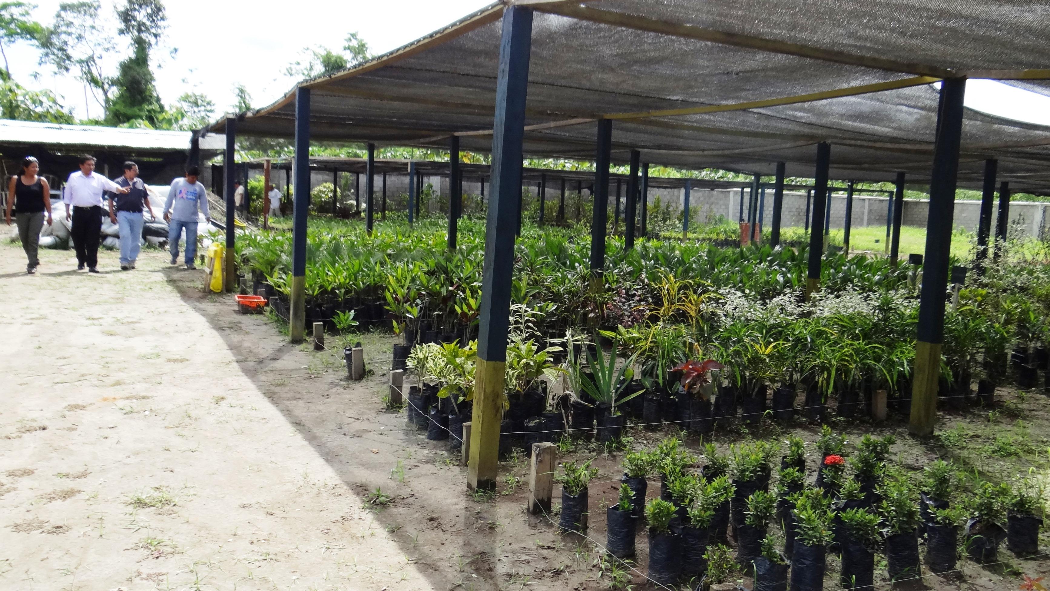 Municipalidad de tambopata repotenciar vivero municipal for Viveros en lima