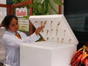 Escolares de Huánuco participarán en final de Feria Nacional de Ciencia y Tecnología