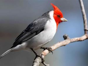 Ayacucho será sede del XI Congreso Nacional de Ornitología