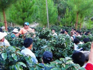 Realizan pasantía para mejorar producción de café y cacao en sistemas agroforestales