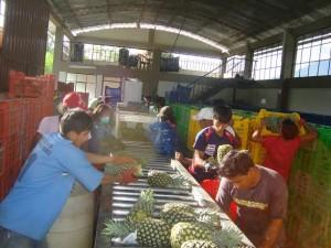 Productores de Satipo recibirán financiamiento para exportar