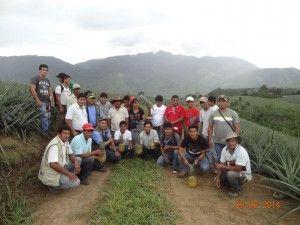 Agricultores del Vraem realizaron pasantía sobre piña en Satipo