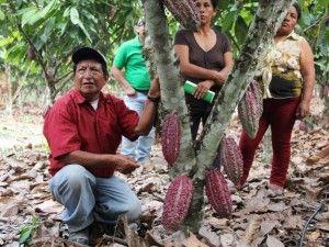 Agricultores del Monzón se capacitan en cultivos de cacao y café