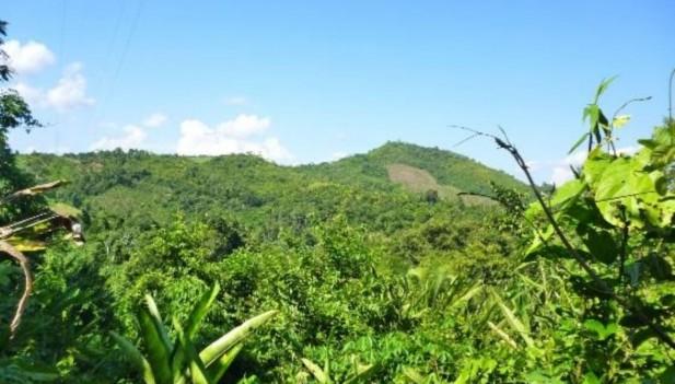 Por medio de las concesiones de conservación, la autoridad forestal y