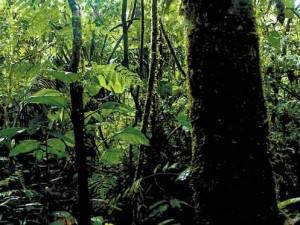 Países inician negociación de instrumento regional sobre derechos ambientales