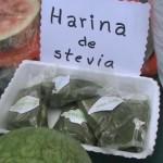 """Gracias al PIR DAIS producimos derivados de stevia"""