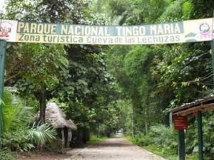 Tingo María: Premiarán a INFOREGIÓN por contribuir con la conservación ambiental