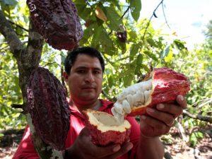 San Martín: Representantes de misión KFW supervisaron avances de desarrollo alternativo