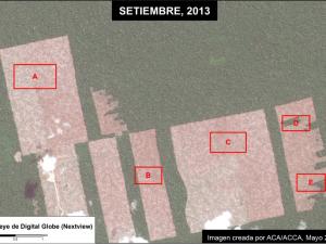 Loreto: Confirman deforestación hecha por United Cacao