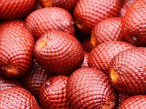Nutricionistas promueven consumo de frutos amazónicos