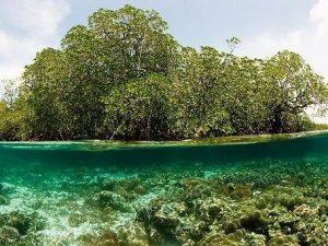 UNESCO celebra Día Internacional de Conservación de Ecosistemas de Manglares
