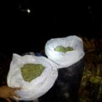 Huánuco: Incautan 40 kilos de marihuana