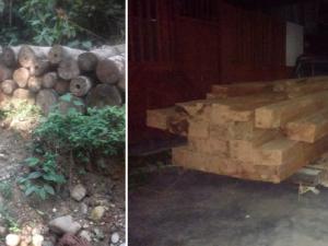 Tingo María: PNP incautó más de 4 mil pies tablares de madera