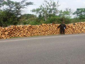 Huánuco: Policía incautó 9 900 pies tablares de madera