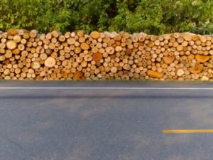 Aucayacu: Policía incautó más de 4 mil pies tablares de madera