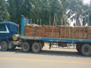 Tingo María: Policía incautó más de 10 mil pies tablares de madera