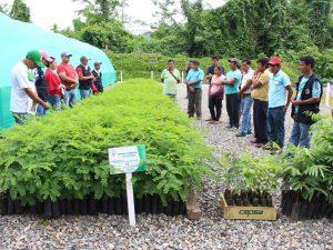 Vraem: Entregan alrededor de 470 mil plantones forestales en Sivia