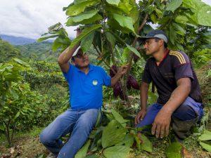 Vraem: Agricultores recibirán insumos para optimizar cultivos de cacao y café